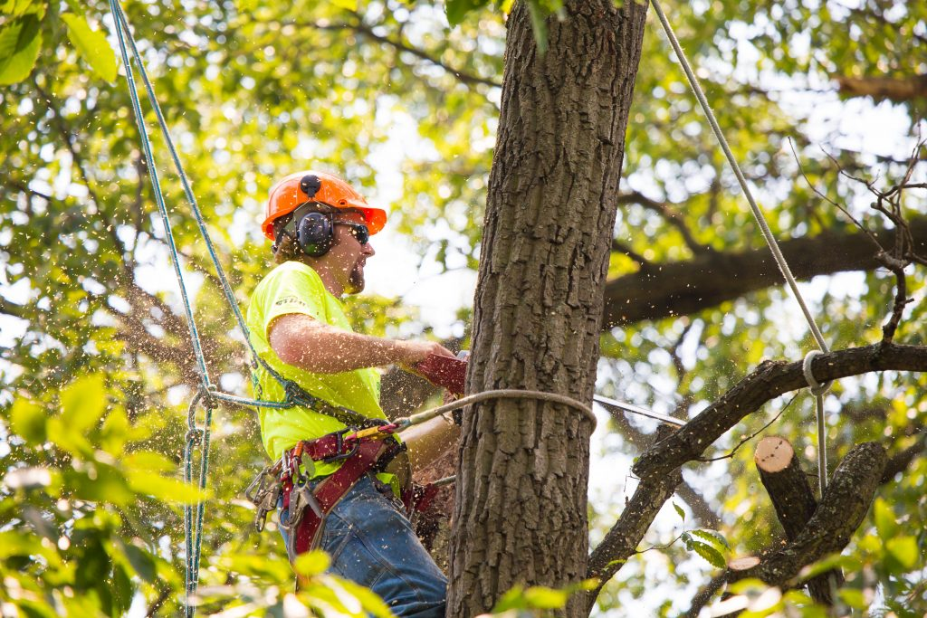 Tree Service Fort Myers